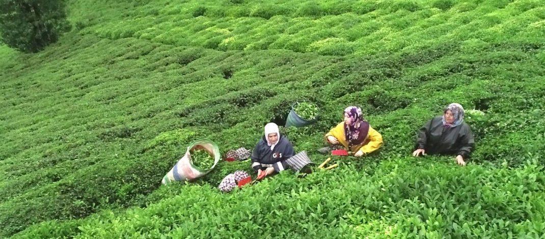 Tığlı'dan, Meclise Çay Önergesi!